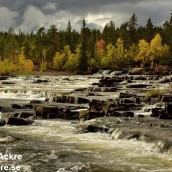Trappstegsforsen, Lappland 1280 72dpi_BIA6373_002963