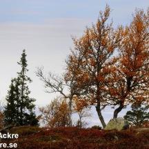 Österdalen, Dalarna _20080926_0482_ 80 72dpi