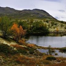 _BAC9732   Dörålen, Rondane, Norge 1280 72dpi