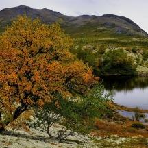 _BAC9729   Dörålen, Rondanr, Norge 1280 72dpi