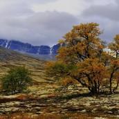 _BAC9656  Dörålen, Rondane, Norge 1280 72dpi