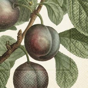 Servett - Plommon