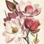 Posters Vintage - Magnolia rosa ny