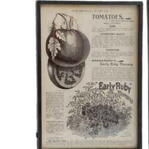 Tavlor med ram - Tavla med ram tomat