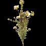 Konstblommor - Konstblomma beige/brun