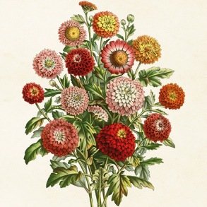 Posters - Poster Chrysanthemum