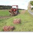 Potatis och traktor