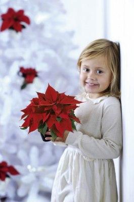 julflicka_blomsterfrämjandet