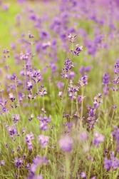 weleda lavendel