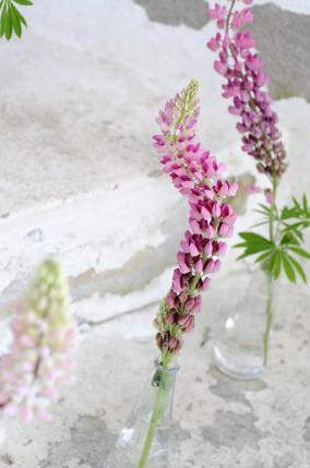 Blommor_lupiner_ElinOlsson