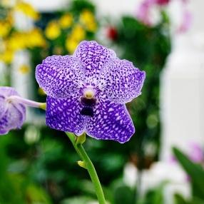 Prickig orkidé till bröllopet - går att återanvända!