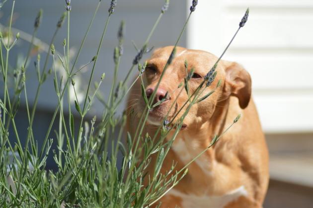 Vicky, rescue från Spanien. 7 år