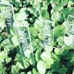 Odlingspinnar 3-pack