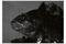 narfish3