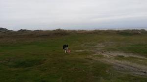Valet av plats, här de halländska stranddynorna, kan påverka träningsläget såväl hos mig som hos min hund.