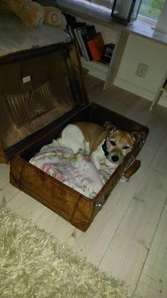 """Finaste hundbädden jag sett - och dessutom med en fantastiskt fin liten hund """"inuti"""":-) Tiger stal mitt hjärta totalt!"""