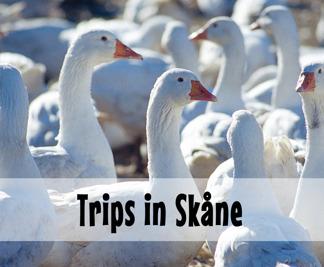 Trips in Skåne