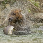 Katmai nationalpark