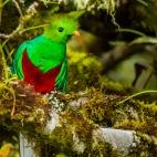 Quetzal- Costa Rica
