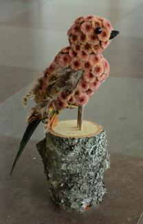 Fågel - Fågel
