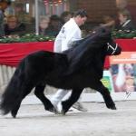 Alex-v.d.-Ponyhoeve-kampioen-grote-maat-2012