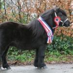 alex-van-de-ponyhoeve