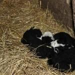 Hemse nyfödd
