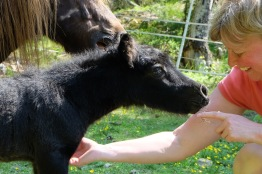 Nyfödd Amaretto med uppfödare.  Foto: Furunäs