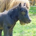 Amaretto nyfödd 2