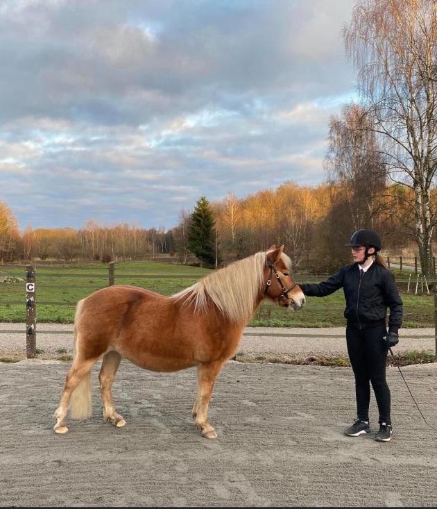 Wida med russtoet Idunn 4200 - BRONS i Sverige i visa häst vid hand (ålder 12-17år)