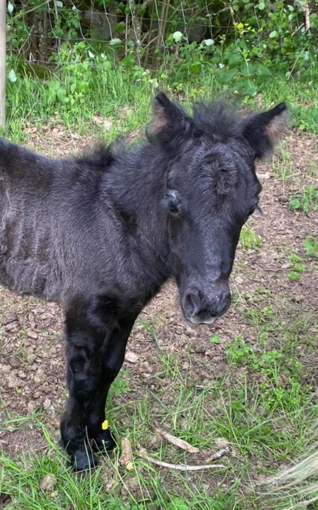 Lille Pigge föds den 8/6. Helbror till Sigge därav smeknamnet :)