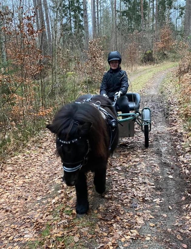 Wida startar träning av sina ponnyer på allvar.