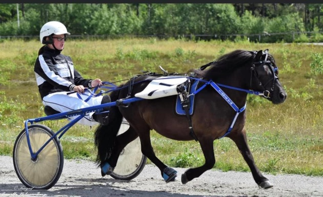 Simmer Dim of Lady's Holm RS 7583. Foto: Camilla Nilsson-Borg