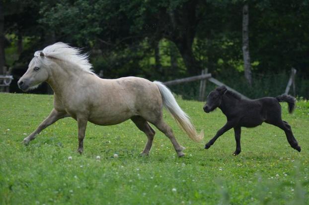 Till Minne av vår vackra Anneke som bodde på stuteriet 2013-2021. Hon fick aldriig några föl hos oss. Hon är det bästa exemplet på att en bra häst har ingen färg då hon var både bländande vacker och  var  oerhört fin exteriört.