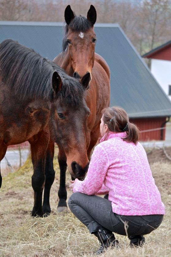 Kurser i djurkommunikation med hästar & hundar hos Yvonne Roobol mellan Ullared & Falkenberg i Halland