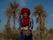 Guide i Nkob med berberskor