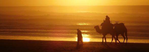 En dromedarsritt kan göras både i Sahara och på stranden i Essaouira. Upplevelser med marockoresan.se