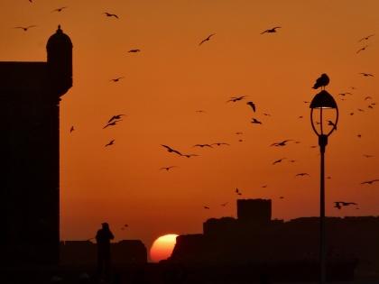 Till Marockoresans Essaouira söker sig surfare & kitare från hela världen