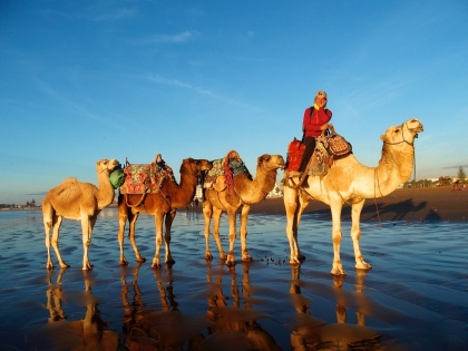 Upplev en dromedarsritt i solnedgången på Essaouiras strand.