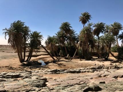 En riktig oas ute i Saharas öken där vi äter picknicklunch