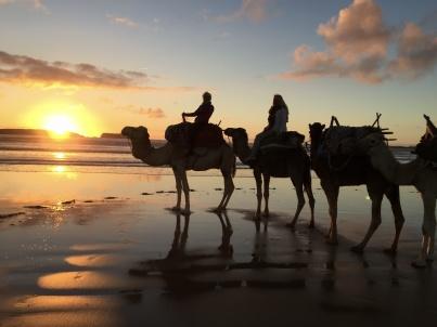 Att rida dromedar i solnedgången på stranden är oförglömligt!