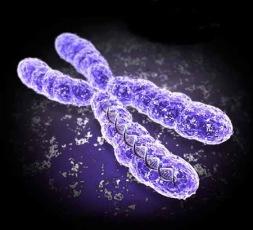 NIPT Uppsala,  ett sätt att påvisa enkromosomavvikelse hos fostret.