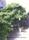 wisteriahuset