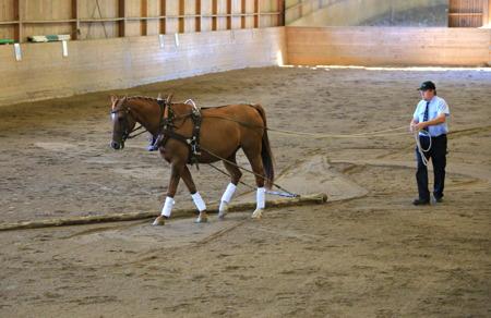 Avancerad körning med häst, till stämningsfull musik.