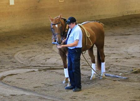 Är man en duktig häst så ska man naturligtvis ha belöning.