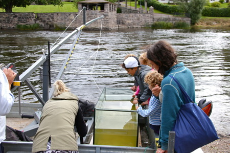 Fiskarna släpptes i en vattentank för allmän beskådan.