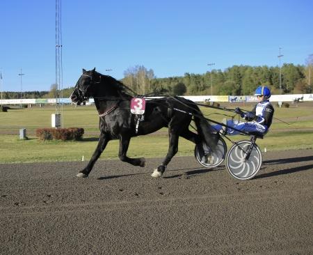 Art Kjarvald med Magnus A Djuse i sulkyn.