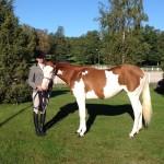 TA horsetraining