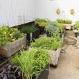 Kvarteret Ödlan, konceptskiss för utvecklingen av utemiljön vid ett nytt kultur- och naturhus, odling, Jönköping