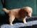 Rocco (7)
